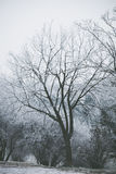 Tree  covered with frost Stock Images