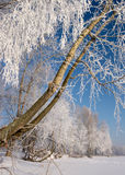 Tree covered with frost Royalty Free Stock Photo