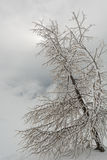 Tree covered in frost. Growing from snow Royalty Free Stock Images