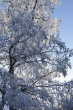 Tree covered in frost. Royalty Free Stock Photos