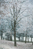 Tree  covered with frost Stock Photos