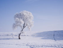 A tree covered with glaze. A tree covered with ice feathers Royalty Free Stock Photo