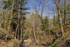Tree covered hillside. Stock Photo