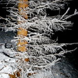 Tree covered with hoar frost close-up Royalty Free Stock Images