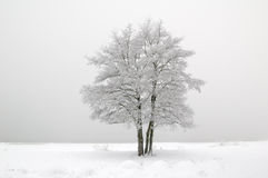 The tree covered with hoarfrost Stock Photography