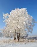 Tree covered with hoarfrost Royalty Free Stock Photos