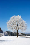 Tree covered with hoarfrost Royalty Free Stock Image