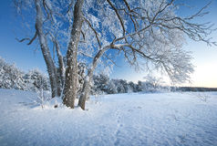 Tree covered with ice Royalty Free Stock Images