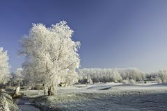 Tree covered with ice and snow Stock Photos