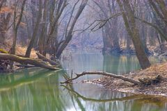 Tree Covered River. In early winter royalty free stock images