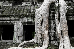 Tree-Covered Ruins of Ta Prohm Stock Image