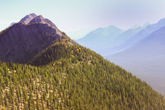 Tree covered slope. Tree covered mountain slope with further peaks in the distance Stock Photography