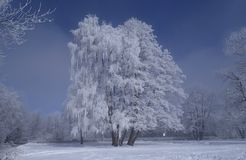 Tree Covered by Snow Stock Images
