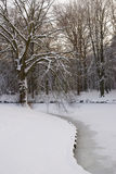 Tree covered with snow. At riverside Royalty Free Stock Image