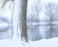 A tree covered with snow. River and tree covered with snow royalty free stock photo