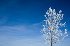 Tree covered with snow Royalty Free Stock Image