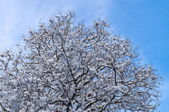 Tree covered by snow against blue sky Stock Photo