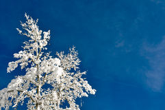 Tree Covered in Snow with Blue Sky Stock Images