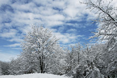 Tree covered with snow Stock Photos