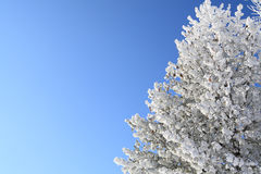Tree covered with snow Royalty Free Stock Photography