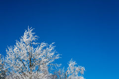 Tree covered with snow Royalty Free Stock Photos