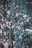Tree covered with snow in the dark Royalty Free Stock Photos