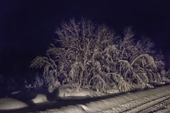 Tree covered with snow in the dark Stock Photography