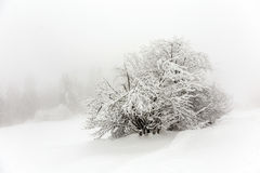 Tree covered with snow Stock Images