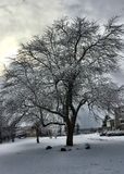 Tree covered in snow Royalty Free Stock Photography