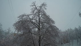 Tree covered with snow in the wind.  stock footage