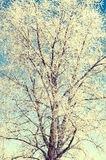 Tree covered by a snow in winter Royalty Free Stock Images