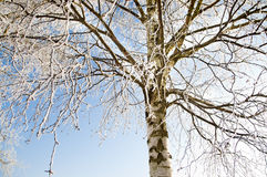 Tree covered by a snow in winter Stock Photos