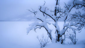 Tree covered with snow Stock Image