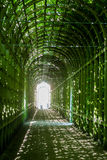Tree covered walkway Stock Photography