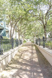 Tree Covered Walkway Through a Nice Park Royalty Free Stock Image