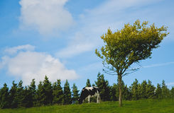 Tree and a cow Royalty Free Stock Photography