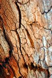 Tree cracked old trunk, vertical background texture close up. Detail stock photo