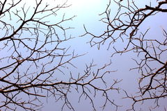 Tree cracking the sky Royalty Free Stock Images