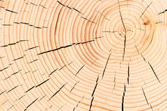 Tree with cracks Stock Photography