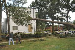 A tree crashed into a window of a townhouse stock image