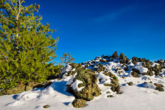 Tree at craters of the moon. Landscape at craters of the moon in Idaho stock photo