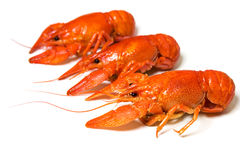 Tree crayfishes Royalty Free Stock Photography
