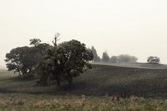 Tree between crops. In black soil Stock Images