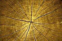 Tree cross cection Stock Image