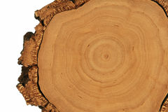 Tree cross section. Smooth tree cross section with thick bark on white background stock images