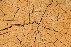 Tree Cross Section. Cross section of a tree showing detail of growth rings and cracks Stock Photo