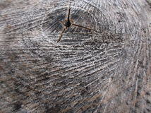Tree cross section and tree ring. Landscape Royalty Free Stock Photo