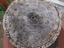 Tree cross section and tree ring. Landscape Stock Photography