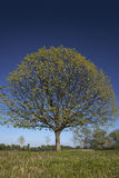 Tree crown. Beautiful tree crown with yellow and green leaves on a blue sky background stock photography