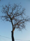 Tree. Crown of the tree without leaves Royalty Free Stock Photos